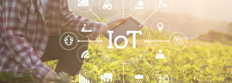 How the Internet of Things Can Increase Agricultural